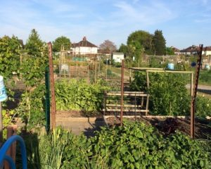 Stewart Avenue Allotments Open Day